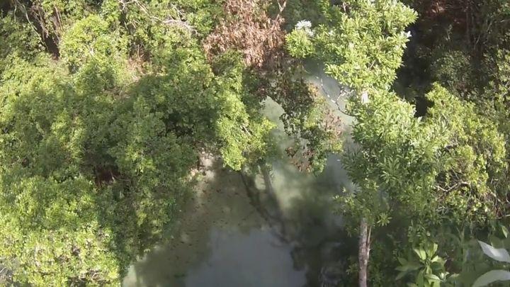 Прыжок в реку с дерева высотой более 18 метров