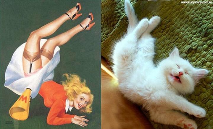 pinupcats11 Кошки и девушки в стиле пинап
