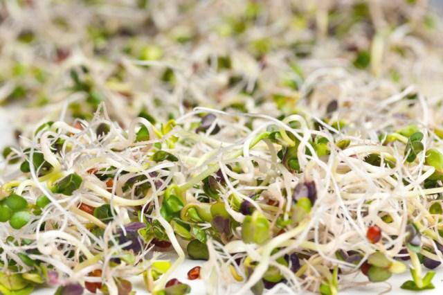 Состав и лечебные свойства проросших семян