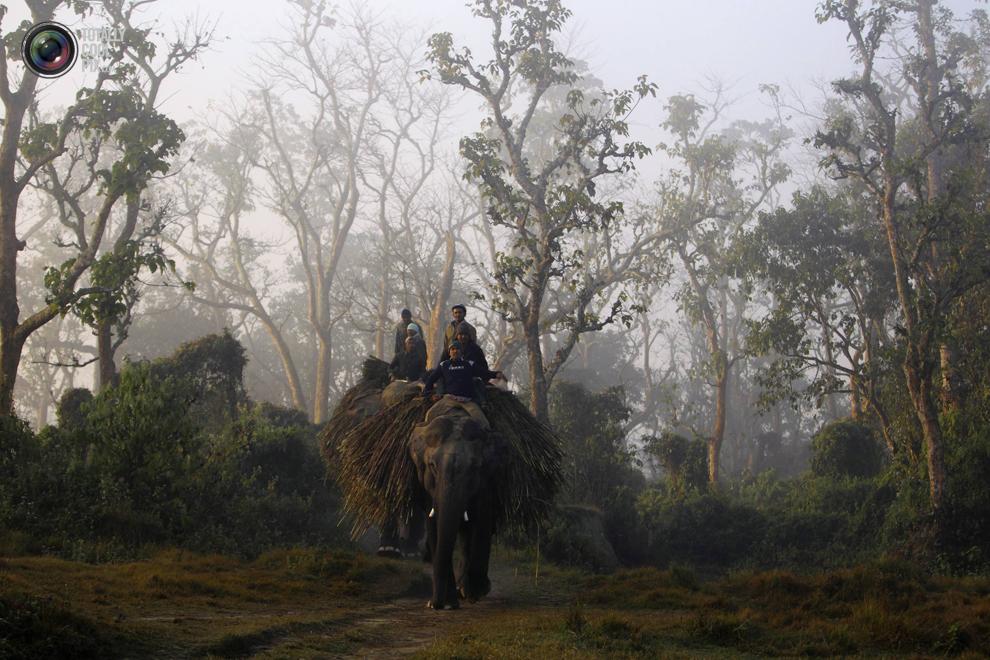 elephants 011 Слоны в национальном парке Читван