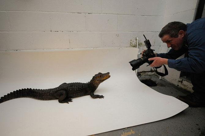Как фотографируют животных