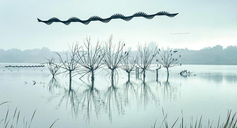 Как бы выглядели следы в небе, если бы птицы могли их оставлять?