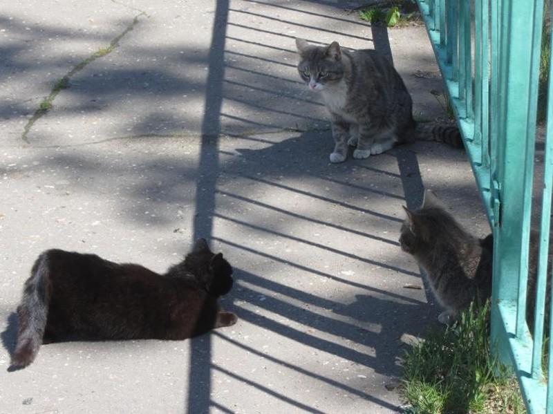Прелюдия бронетехника, животные, коты