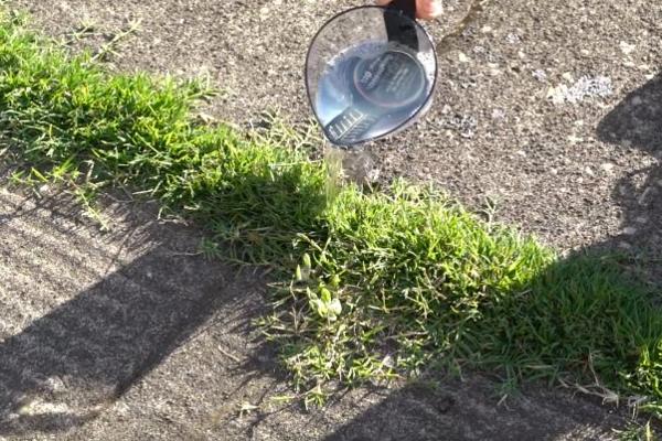 Как легко избавиться от трав…