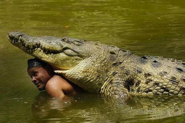 И крокодилы умеют любить! (невероятная история!)