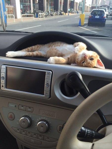 В каждой машине должен быть подкотейник