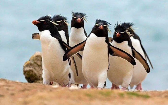 Животные, которые выглядят на фотографиях лучше чем многие знаменитости на обложках модных журналов