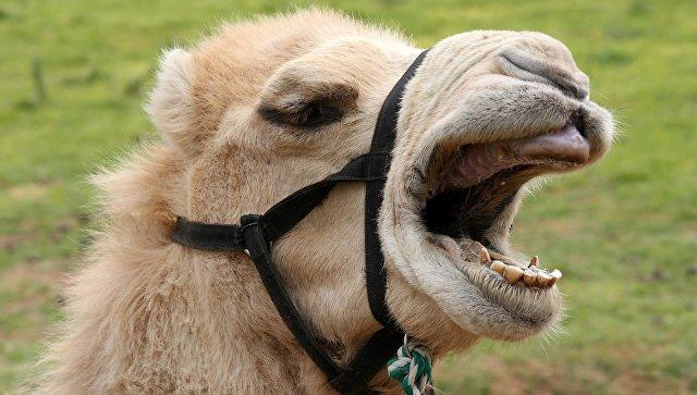 В Приморском зоопарке двое животных напали на обитателей