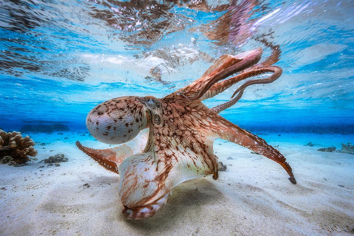 Лучшие снимки Конкурса подводной фотографии 2017