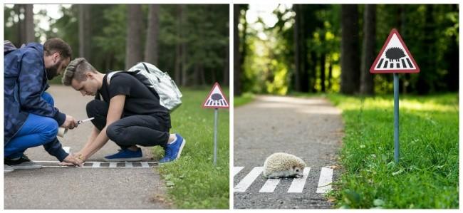 Дорожный переход для ежиков, Литва доброта, животные, мир