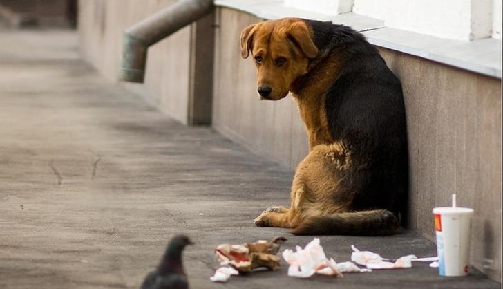 Странный поступок бездомной собаки разоблачил нечестную продавщицу