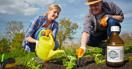 10 причин использовать перекись водорода в огороде
