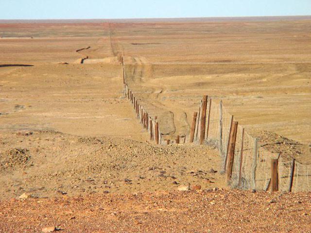 Самый длинный забор на планете 10 фактов о Австралии, австралия, факты