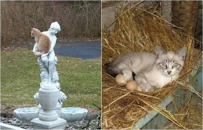 20 неожиданных мест, где котов не ждали, но они появились