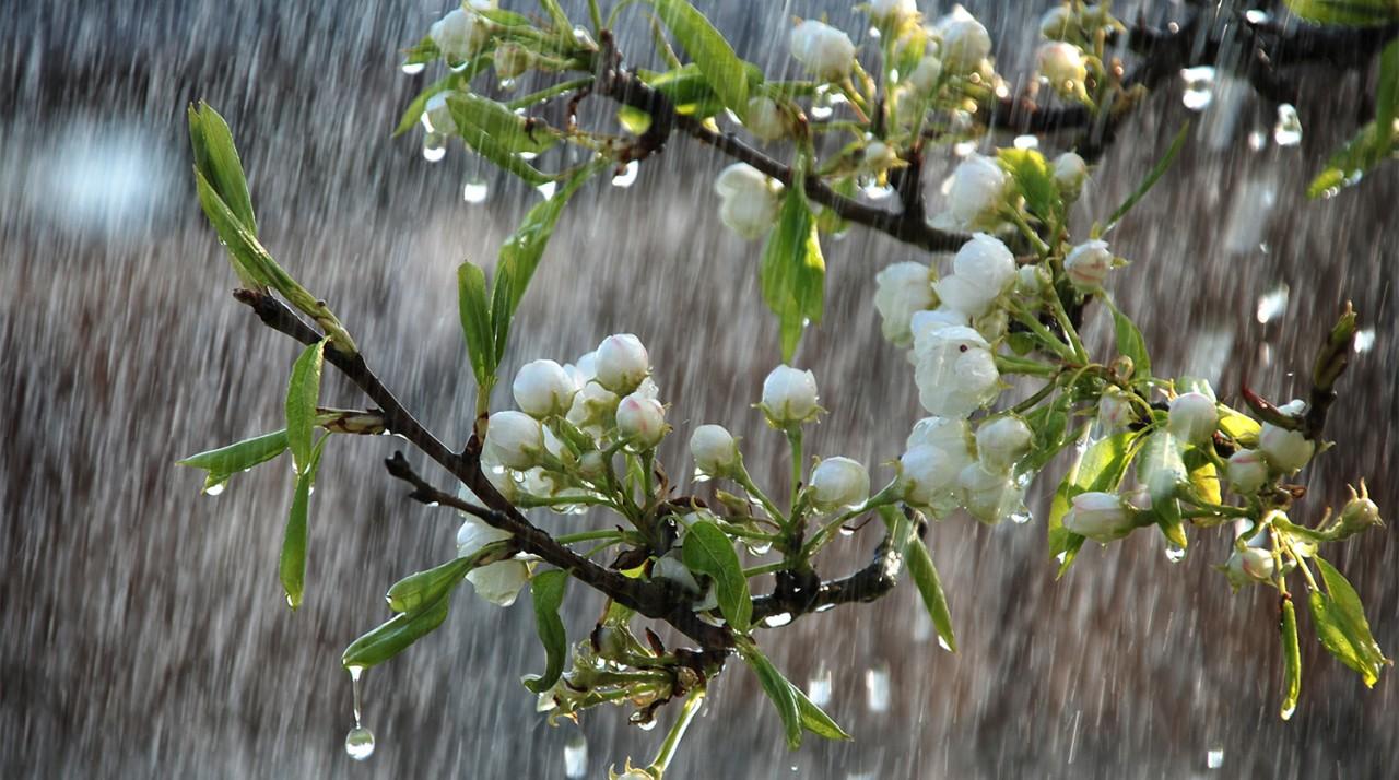 Дожди смывают урожай