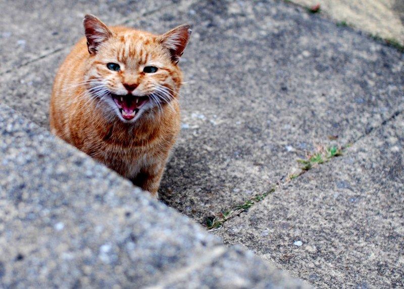 Image result for уличным кошкам