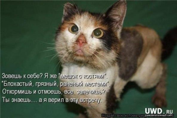 Спасение одной собаки не изм…