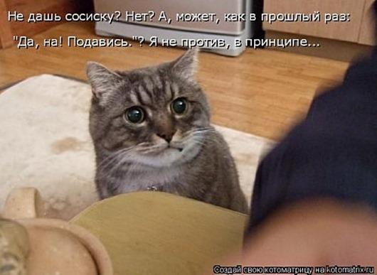 1495826258_kotomatricy-2