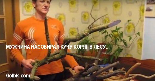 Мужчина насобирал кучу коряг в лесу… Трудно поверить, что из них получается такая красота!
