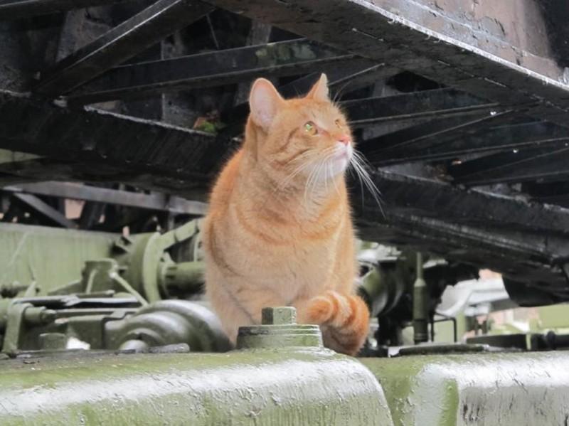 Дай помечтать. бронетехника, животные, коты