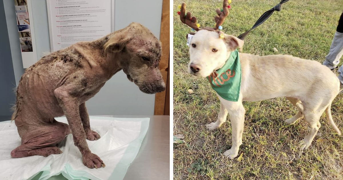 Dog Who Was So Weak Everyone Thought She's Gonna Die Recovers In Less Than 2 Months