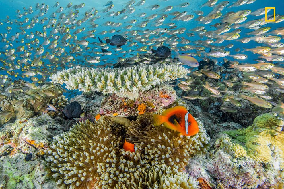 Жизнь на коралловом рифе