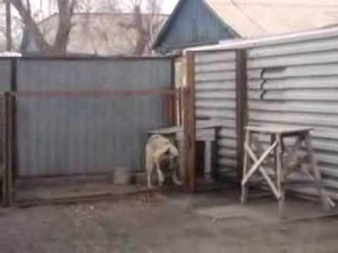 Собака танцует в Караганде район - Михайловка