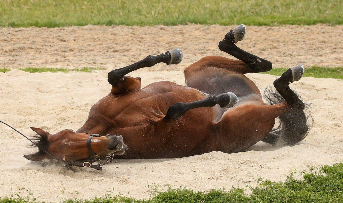 Откуда взялось выражение «конь не валялся»?