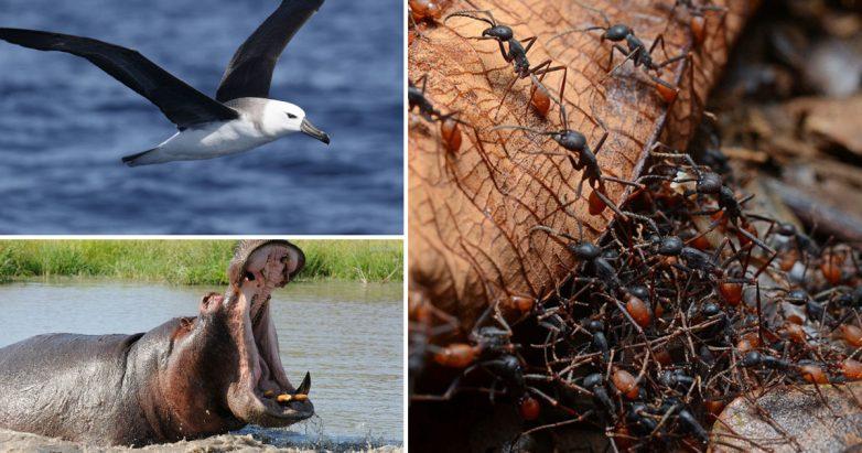 """Рыбки уснули в пруду: как проходит """"тихий час"""" у разных животных"""