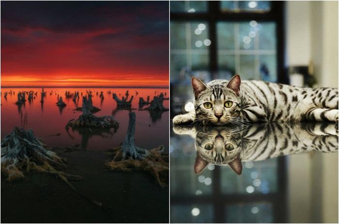 20 ярких фотографий, которые поражают воображение и вызывают бурю эмоций