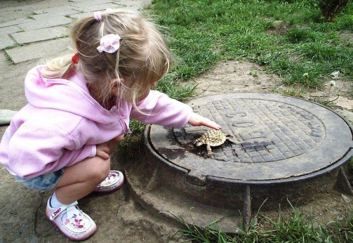 Крохотная Тортилла на канализационном люке