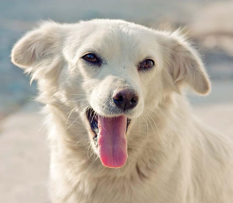 Жизнь и судьба ничьей собаки Белки (часть 1)