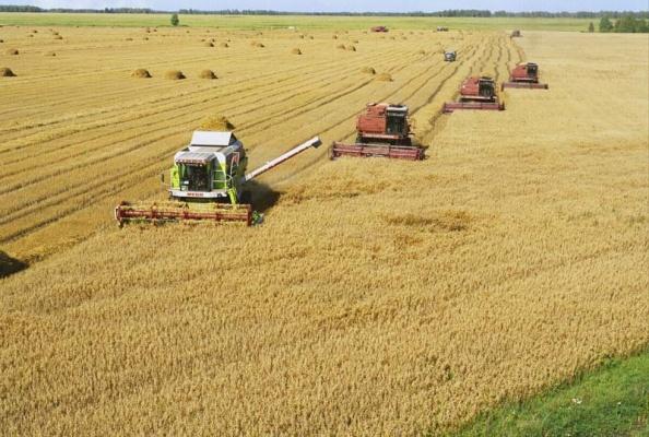 Les Échos: Санкции превратили Россию в агрокультурную сверхдержаву