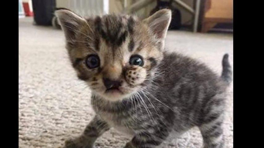 Хозяева высадили этого котенка из машины и уехали…