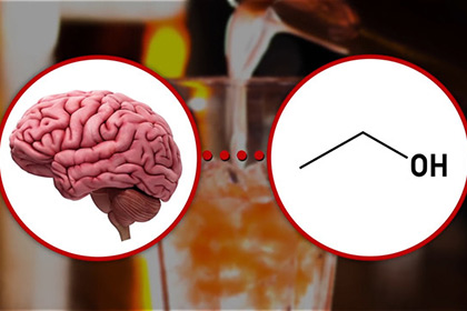 Реакцию головного мозга на алкоголь показали на видео