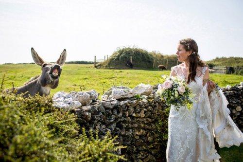 Свадебные фотобомбы с животными (11 фото)