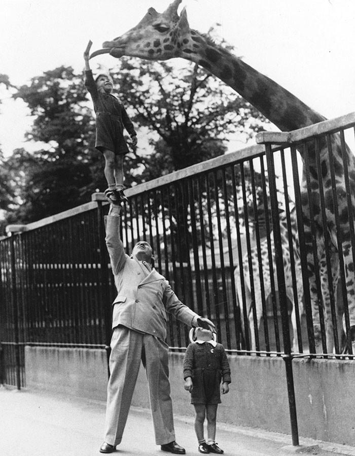 3. Пол Ремос, артист цирка, помогает сыну покормить жирафа в Лондонском зоопарке, 1950 год детство, прошлое, фотография