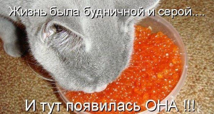 Смешные картинки (29 фото)