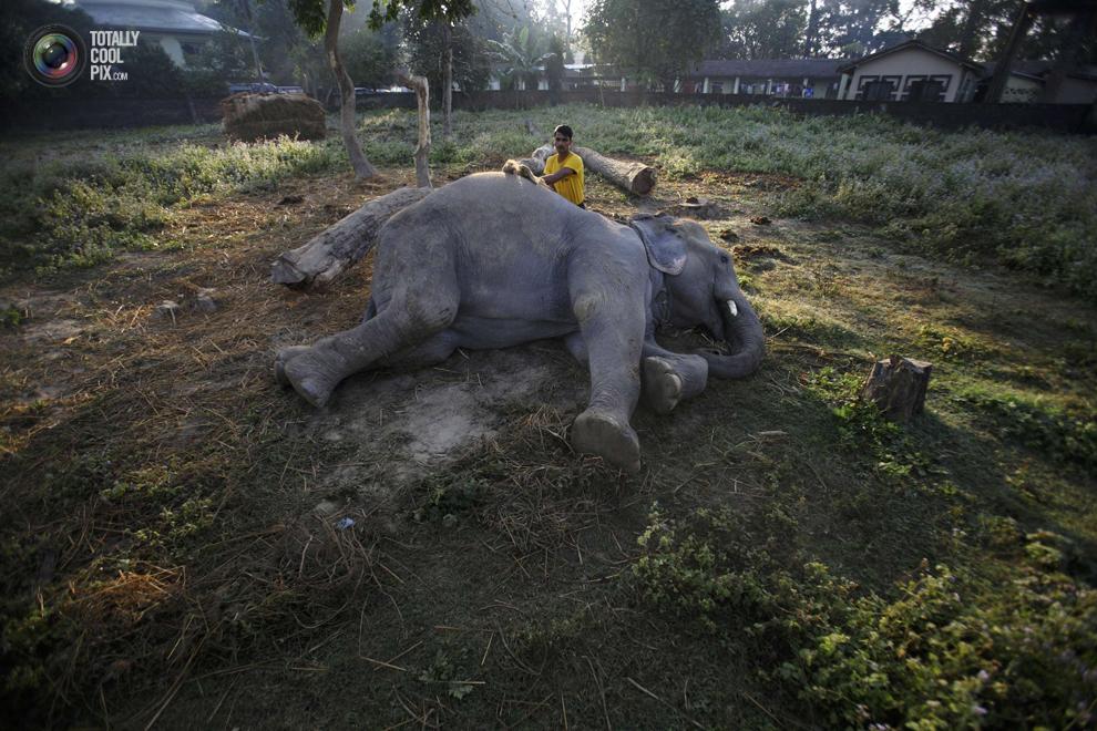 elephants 017 Слоны в национальном парке Читван