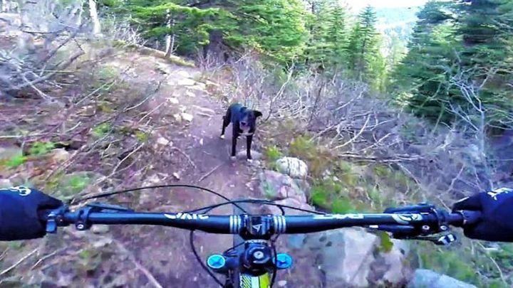 Кто быстрее: райдер или его верный пёс?