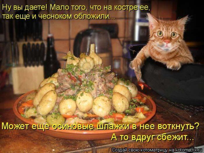 Уморительные котоматрицы, которые не оставят вас равнодушными)