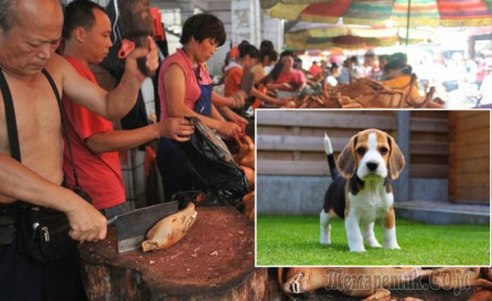 Китайцы смеются над идеей обеда из полукилограммового гамбургера, когда таким количеством мяса можно накормить целую семью...