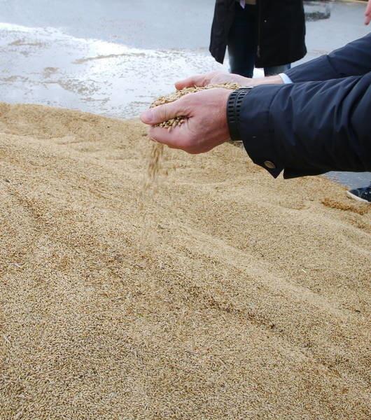 Сахалин возобновил производство зерновых