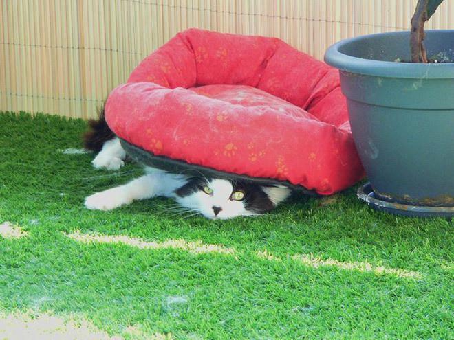 Коты лучше хозяев знают, как использовать их дорогие подарки