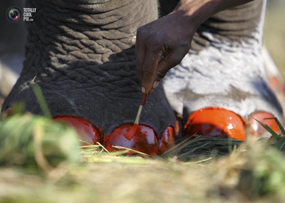 elephants 014 Слоны в национальном парке Читван