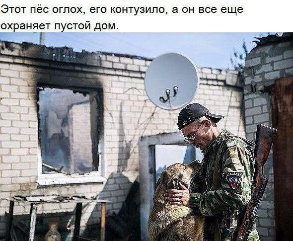 Донецкий пес