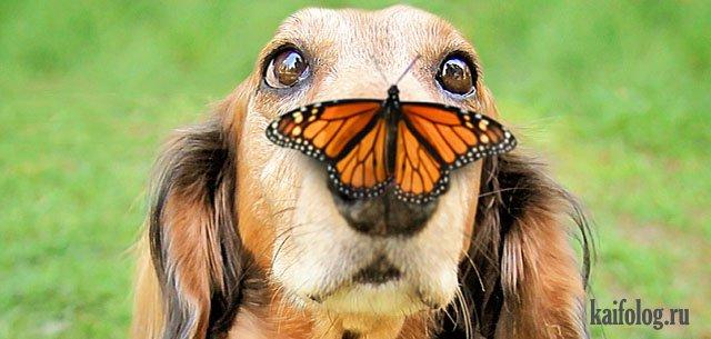 Позитив на понедельник: животные (45 фото)