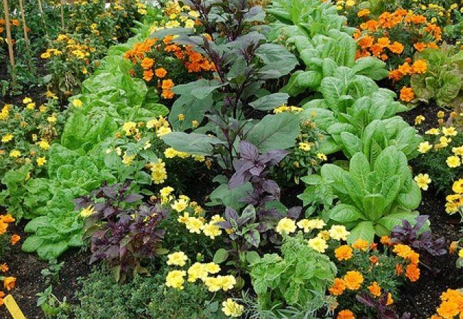 Растения - друзья и враги по соседству