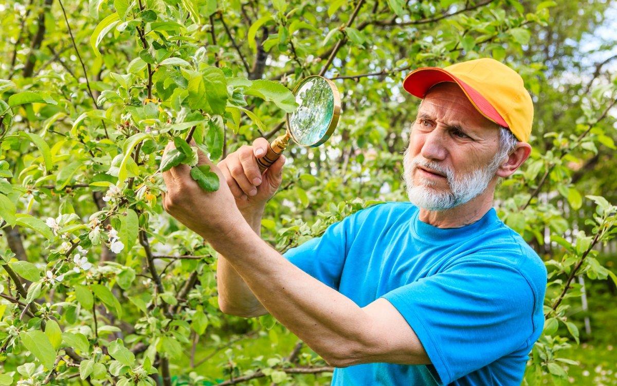 Где зимуют вредители сада и как с ними можно бороться без химии