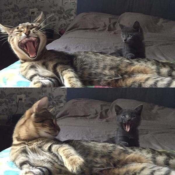 Не правильно ты зеваешь, смотри как надо!